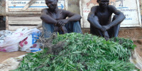 Albert Omona (R) and Timothy Okumu (L) being paraded with the recovered Opium at Gulu Central Police Station. Photo By James Owich