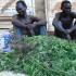 Gulu Opium Farmer Accuses Police of Killing Business