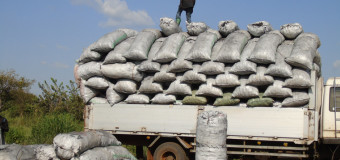 Endangered Tree Species under Threat in Nwoya