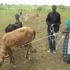 Nwoya Restocking  Companies Hold Supplies Over Debts