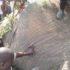Five Die In Karuma –Pakwach Road Accident